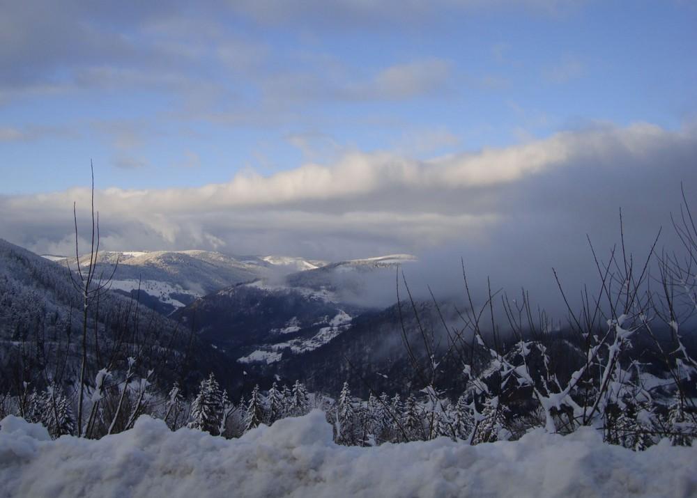 Schwarzwald-Blick