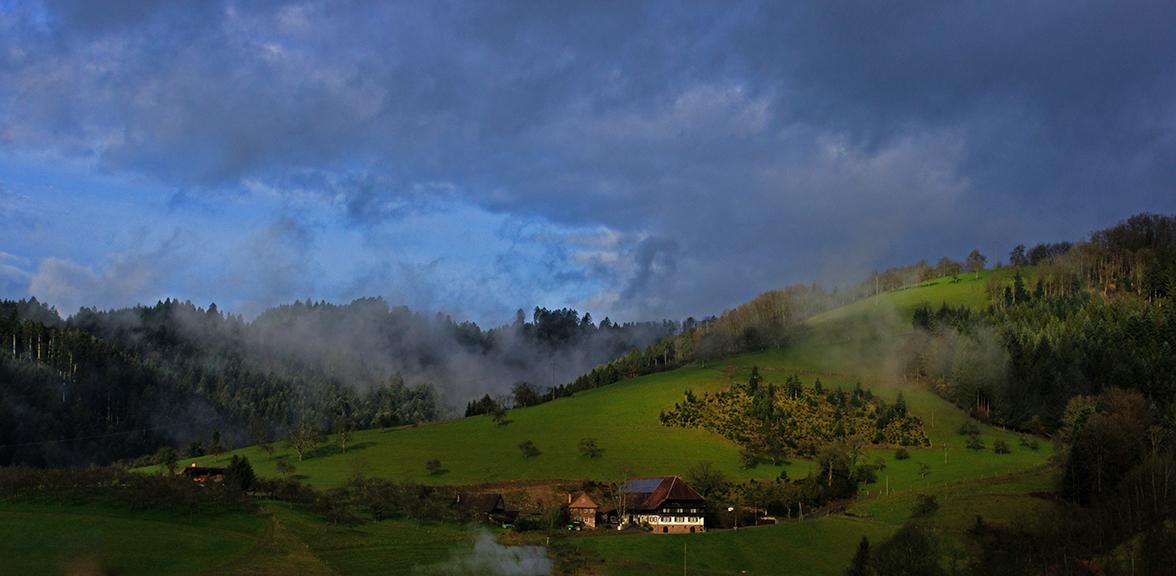 Schwarzwald im Morgendunst