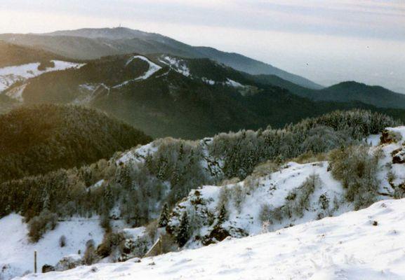 Schwarzwald in weiß