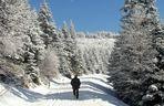 Schwarzwald u. Flöckchen