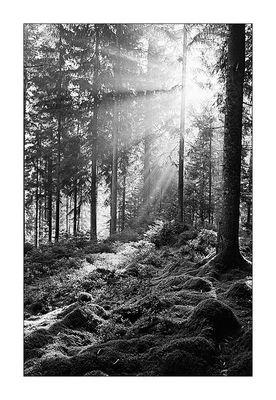 Schwarzwald VIII