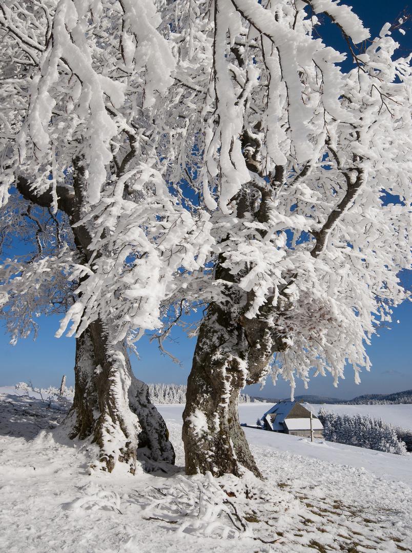 Schwarzwald Winter