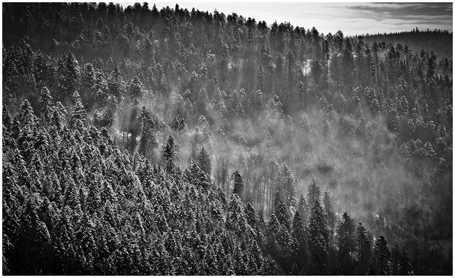 Schwarzwald Winter (IV)