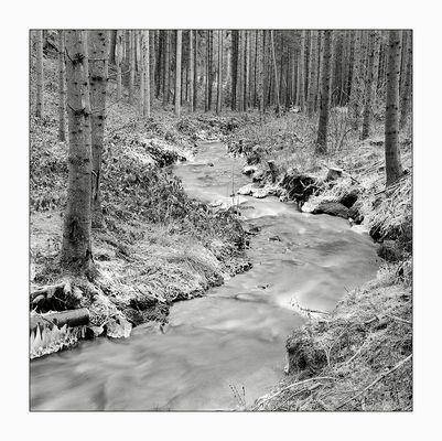 Schwarzwald XVII
