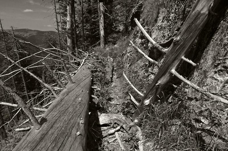 Schwarzwald_02