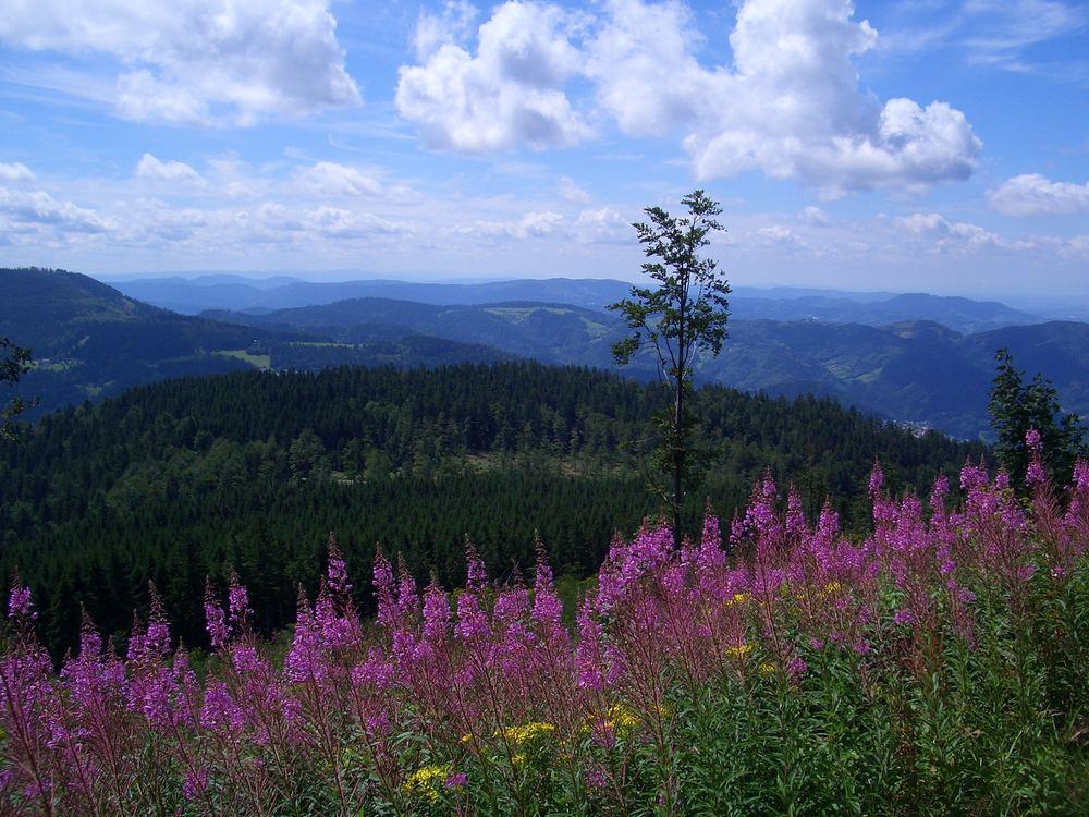 Schwarzwaldblick