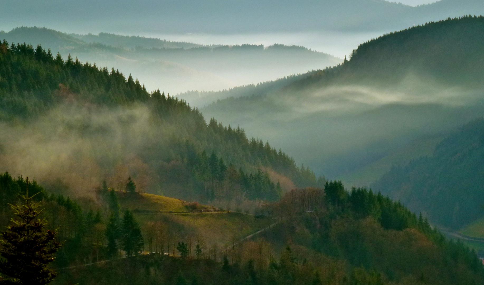 Schwarzwaldblick…..