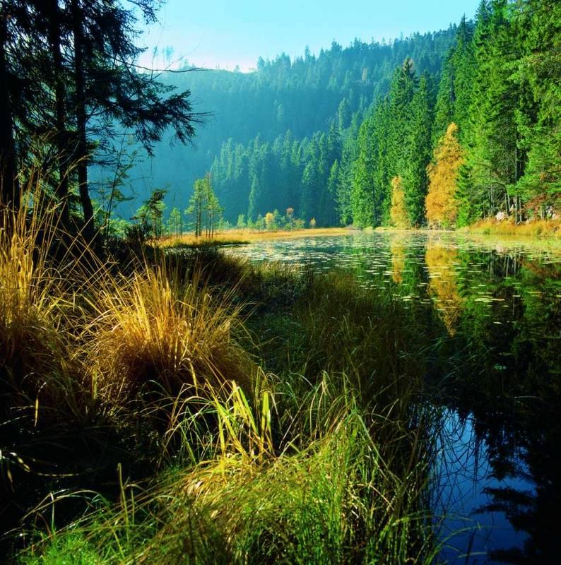 Schwarzwaldsee im Herbstlicht