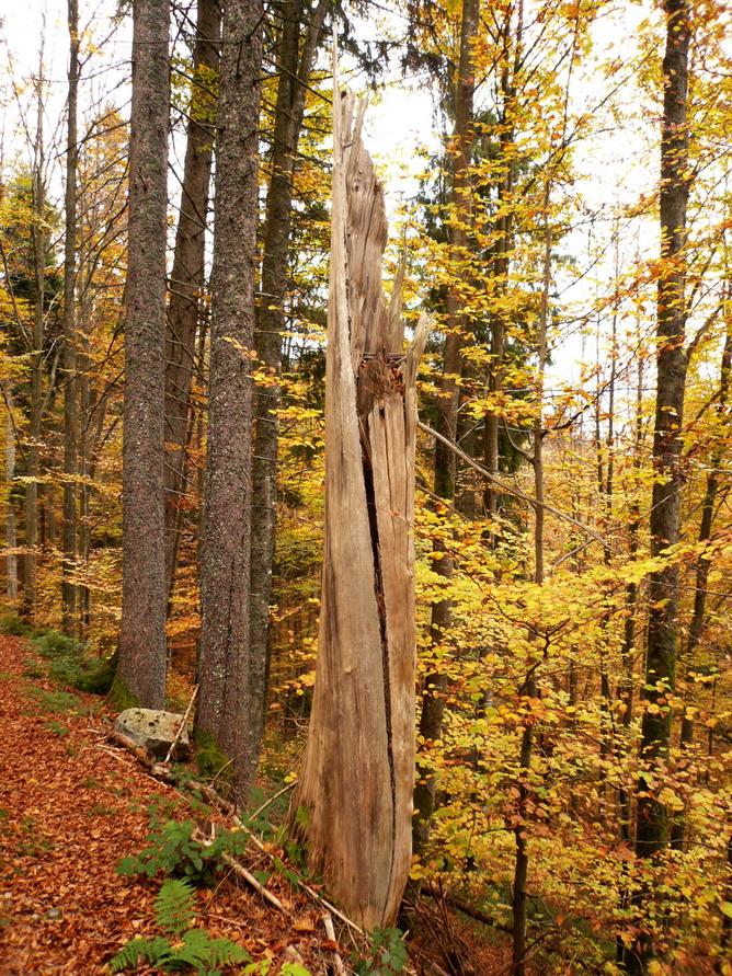 Schwarzwaldserie 6