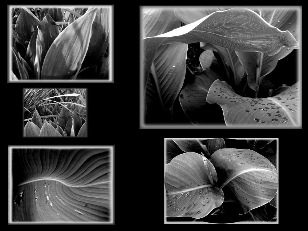 schwarz/weiß Collage