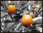 schwarz/weiß und Orange