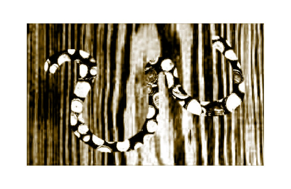 schwarzweisser Holzwurm auf schwarzweissem Holzweg