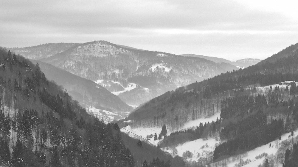 Schwarzweißwald