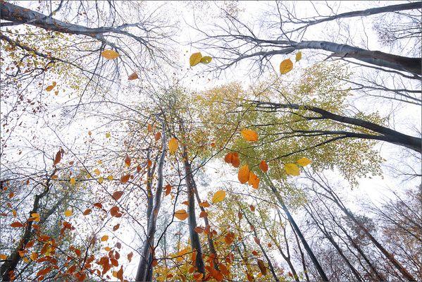 Schwebende Blätter