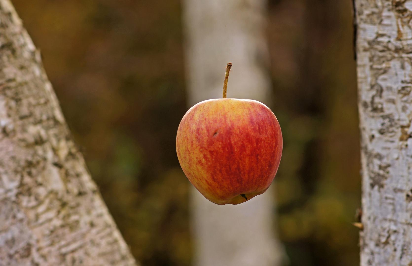 ..schwebender Apfel..