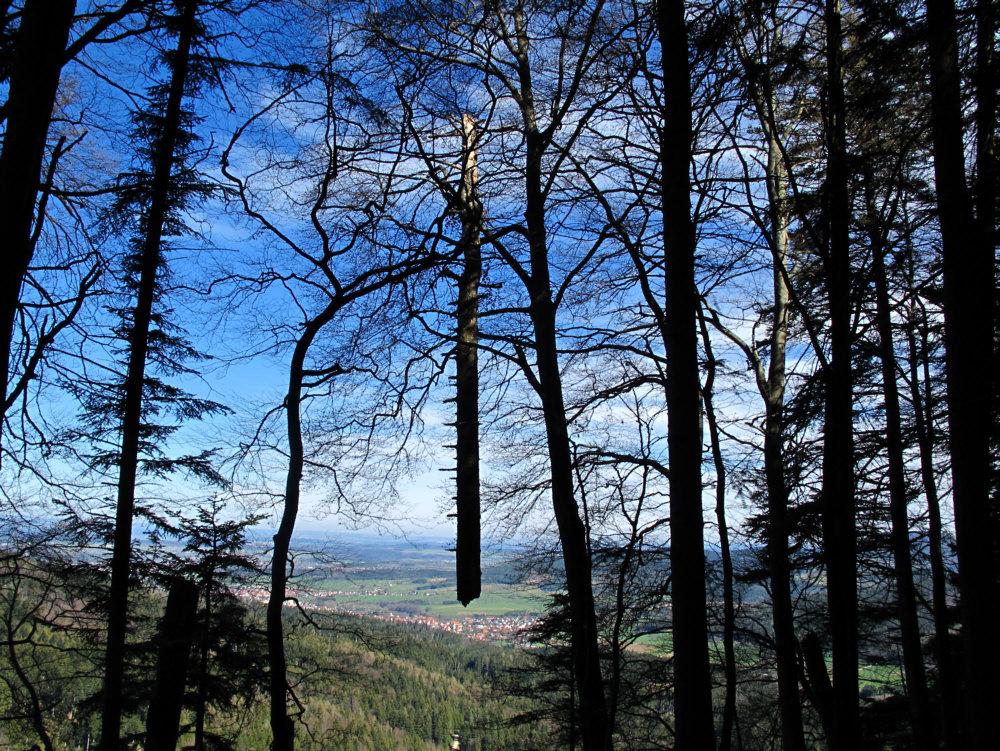 Schwebender Baum