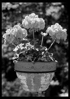 schwebender Blumentopf