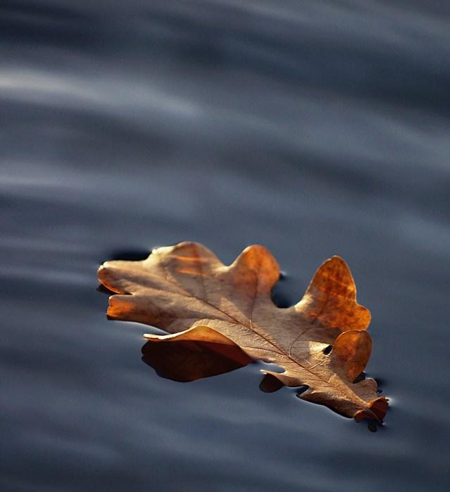 Schwebendes Blatt auf Wasserwolken
