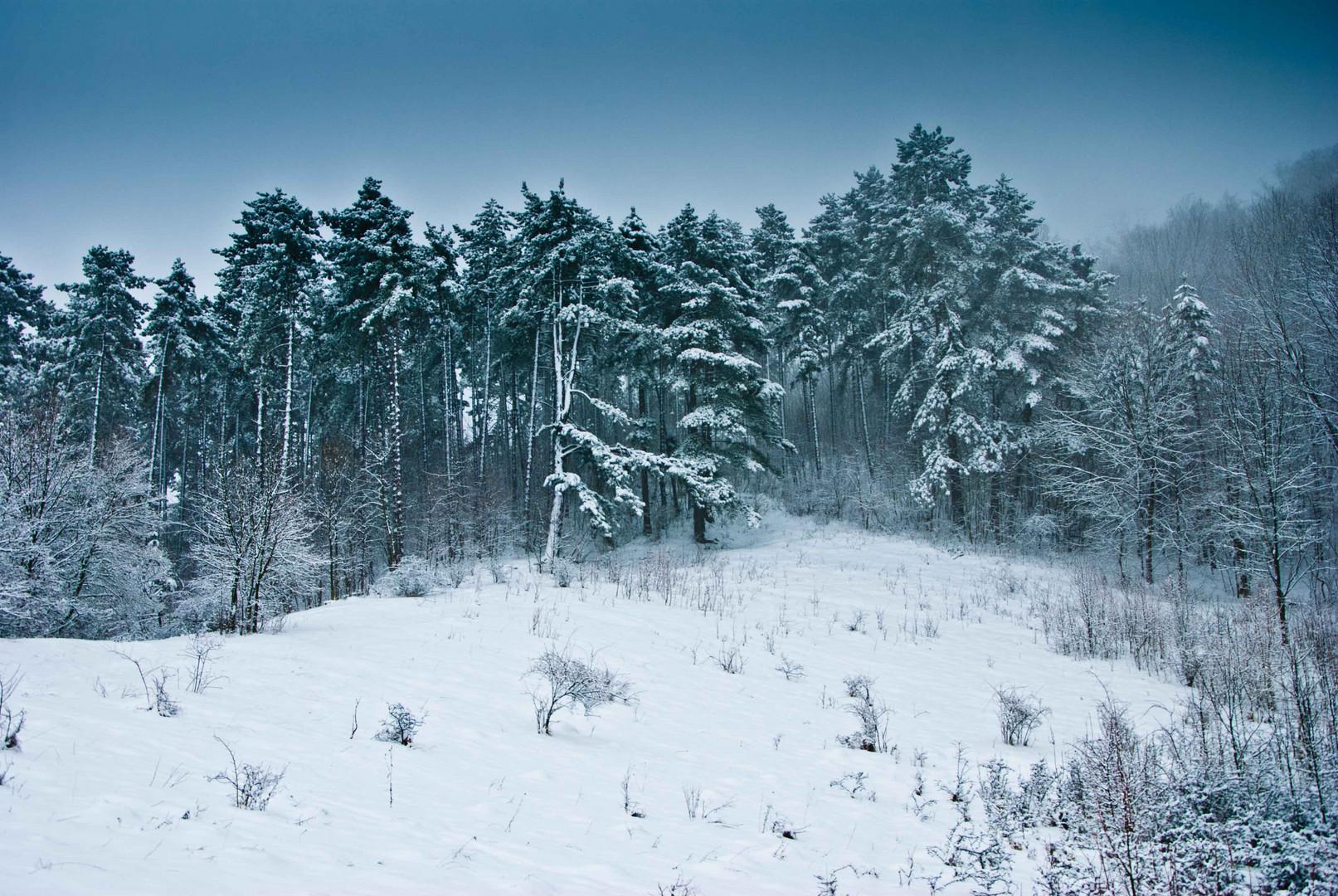 schweigend steht der Wald ...