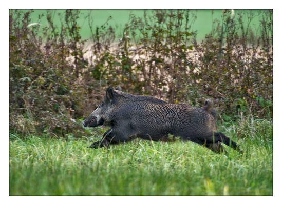 Schwein gehabt.....