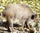 Schwein gehabt  !!!