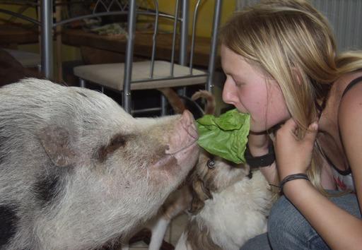 Schwein gehabt ! 3 Vegetarier??