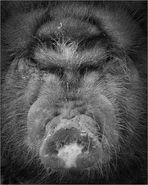 Schwein gehabt....
