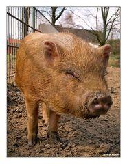 Schwein gehabt :-)