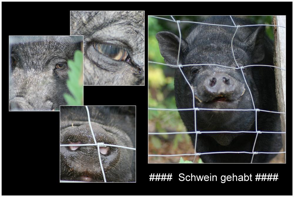 ### Schwein gehabt ##