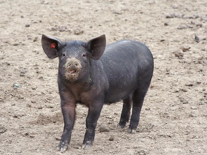 Schwein müsste man haben