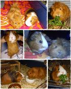..Schweinchen 2011 :)