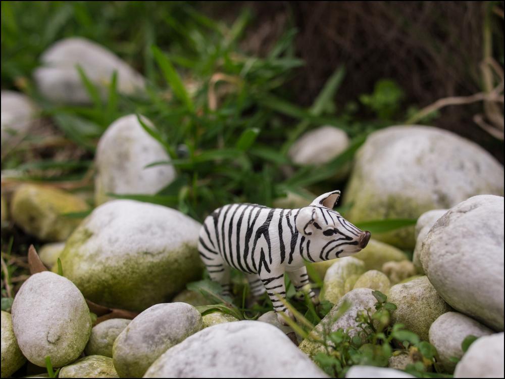 Schweinchen oder Zebra?