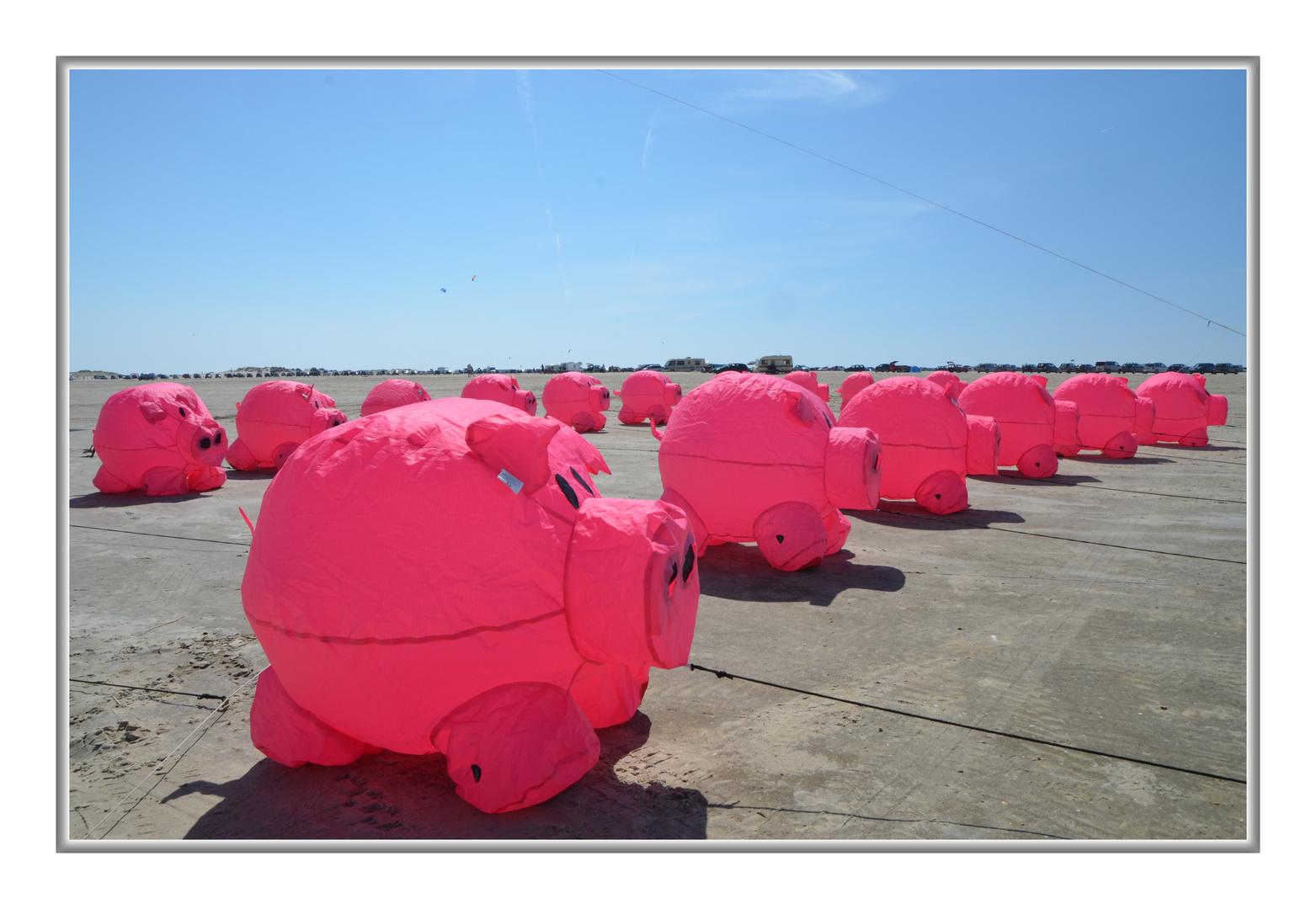 Schweine am Strand