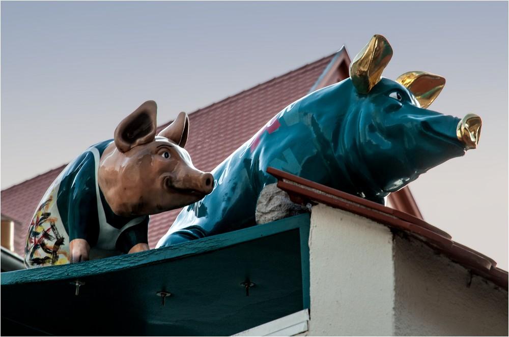 Schweine in Nördlingen