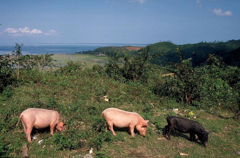 Schwein(e) muß man haben