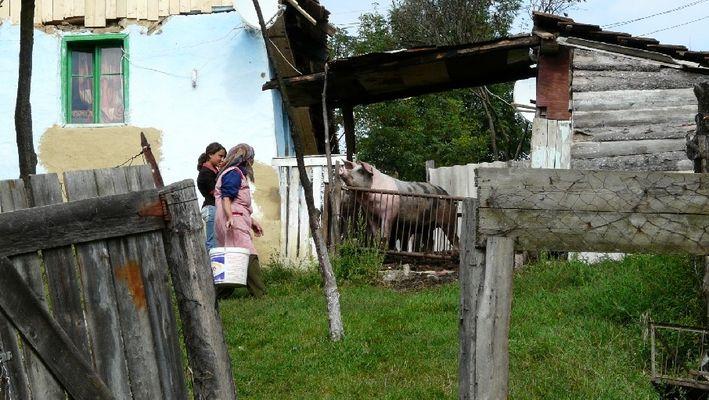 Schweinefleischproduktion gesichert...