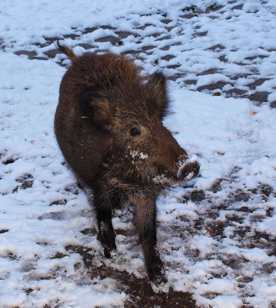 Schweinekalt....heute...