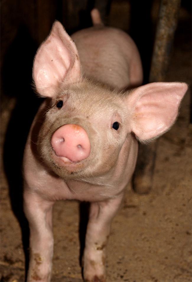 Schweinerei.....