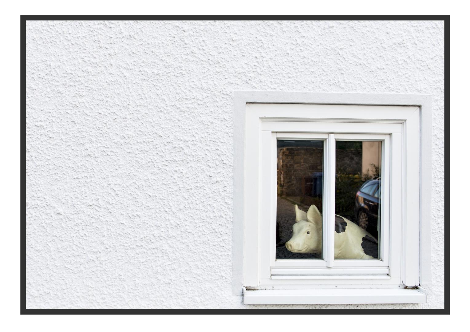 Schweinerei hinter Glas
