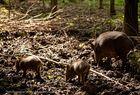 Schweinerei im Wildpark