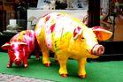 Schweinerei in Giessen