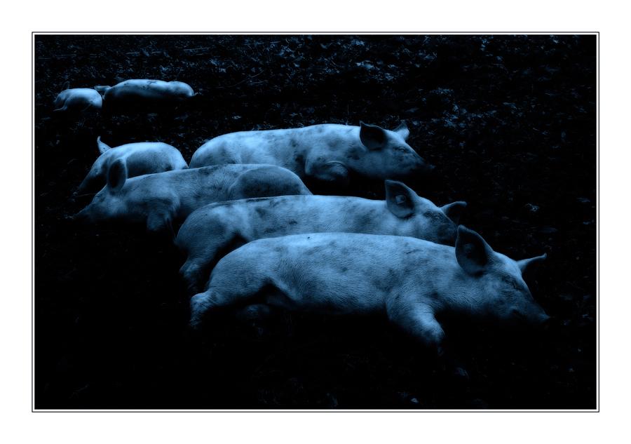 schweinische Träume:-))