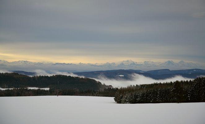 schweizer Alpen und Nebel im Rheintal