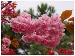Schweizer Blüten