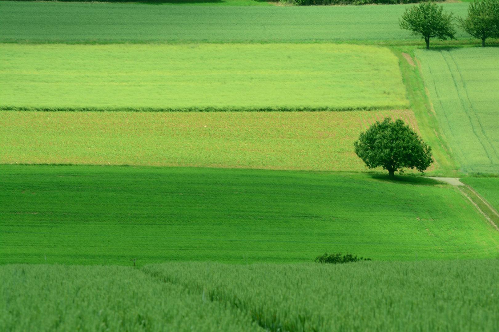 Schweizer Landschaften (4)