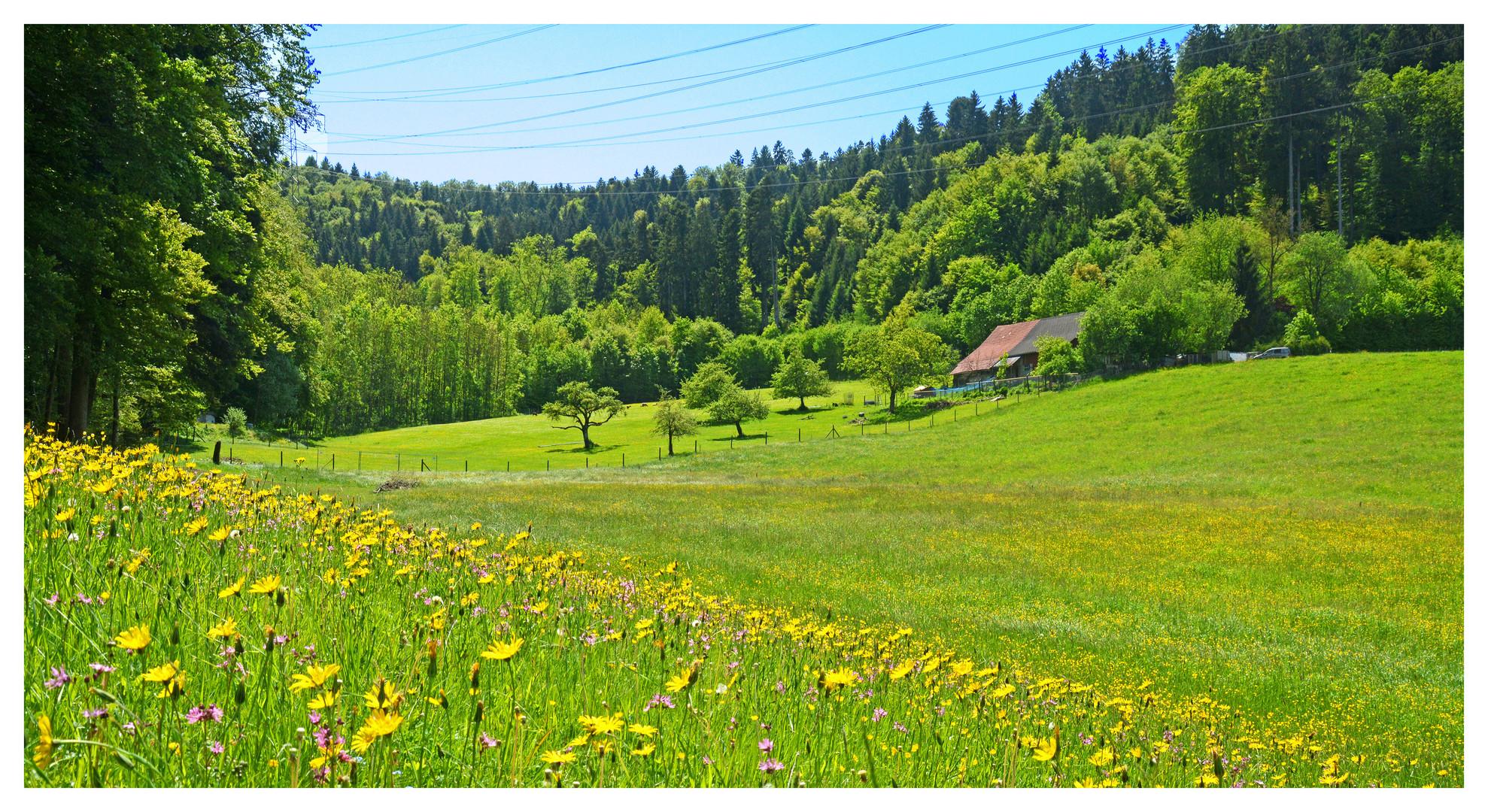 Schweizer Landschaften (67)