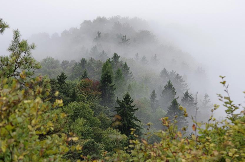 Schweizer Märchenwald