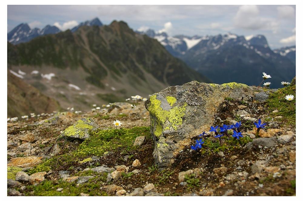Schweizer Nationalpark II