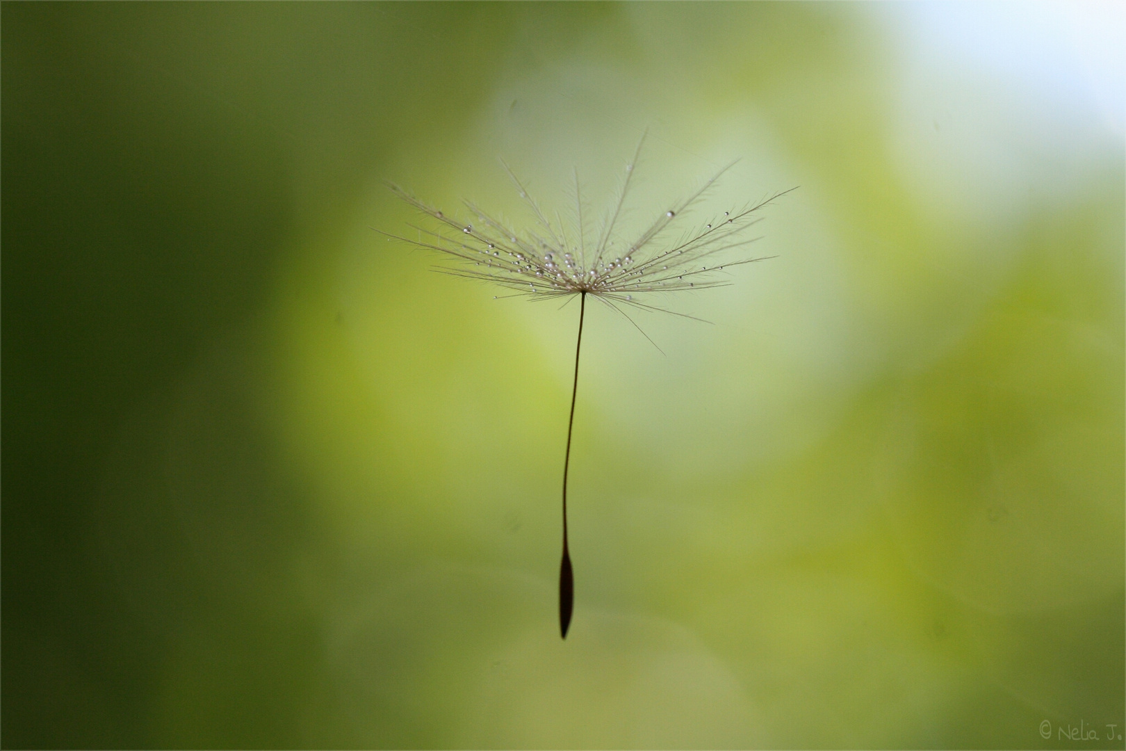 Schwereloses Fliegen