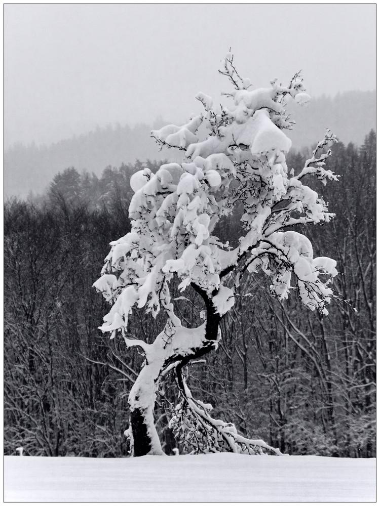 ...schwerer schnee...